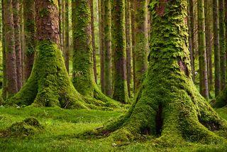 Irelandtree